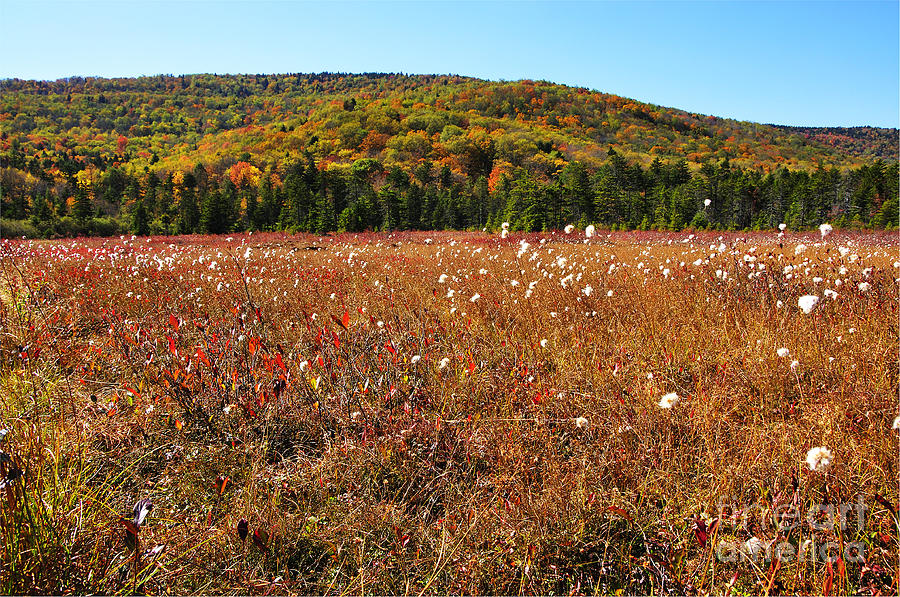 Cranberry Glades Botanical Area Photograph - Autumn In The Glades by Thomas R Fletcher