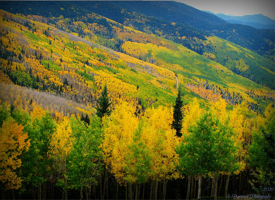 Quaking Aspen Photograph - Autumn In The Rockies by Aaron Burrows