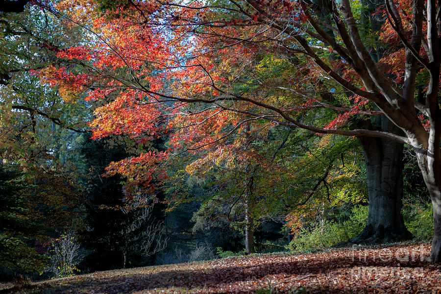 Autumn In The South Photograph