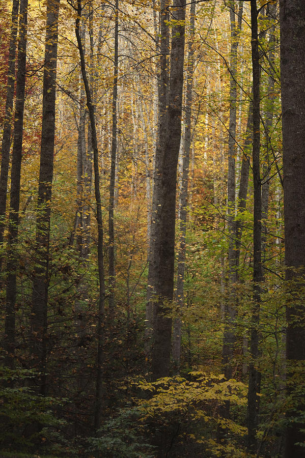Autumn Photograph - Autumn In The Woods by Andrew Soundarajan