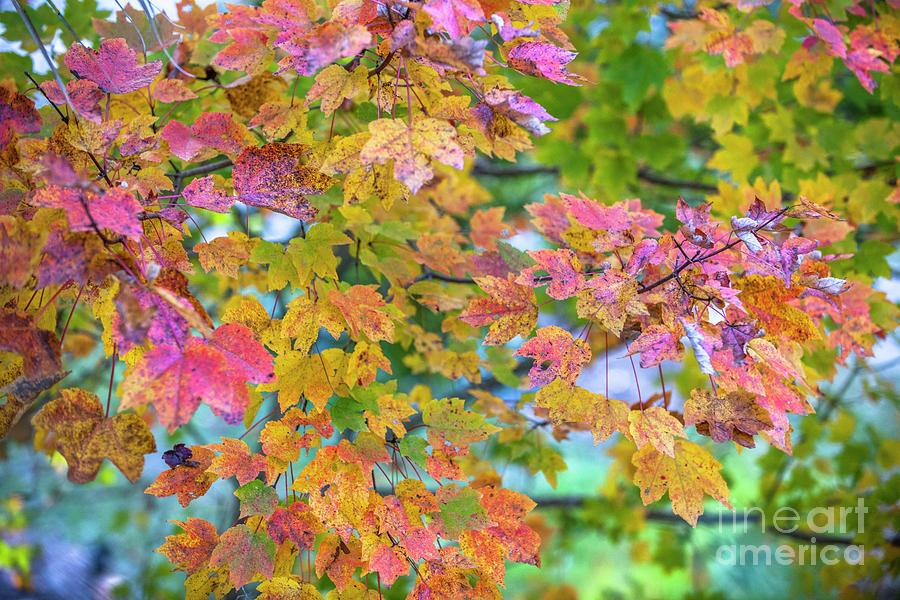 Autumn Leaf Color Photograph