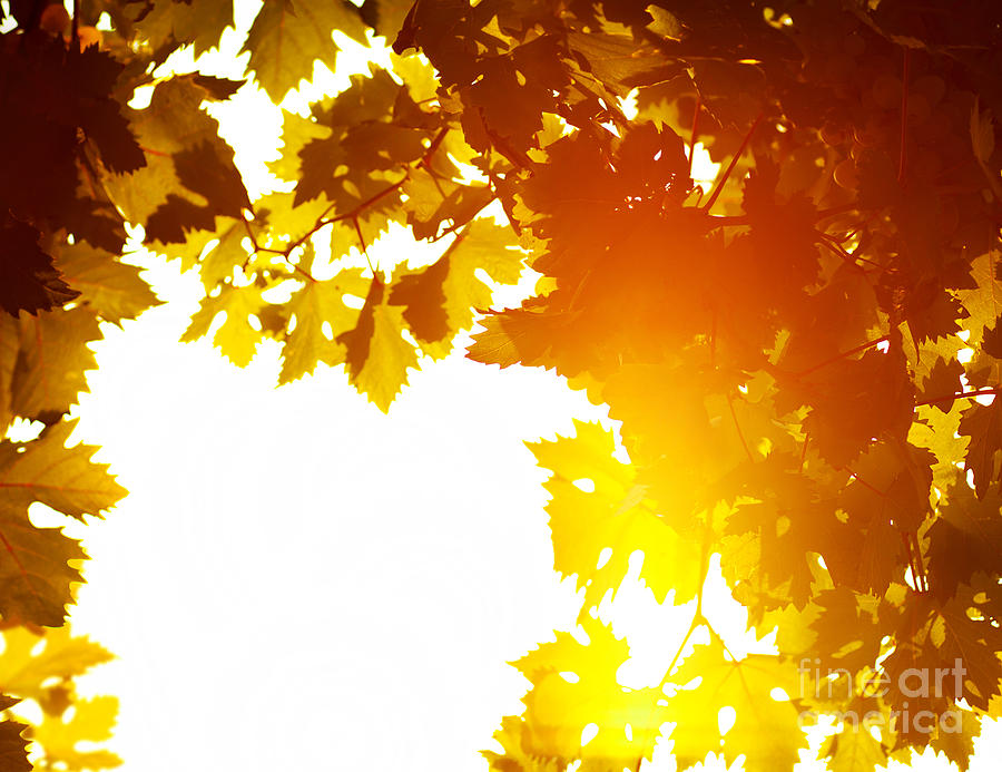 Autumn Leaves Background Photograph