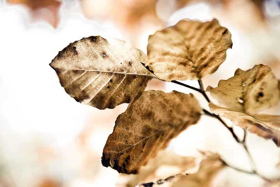 Autumn Photograph - Autumn Leaves by Frank Tschakert