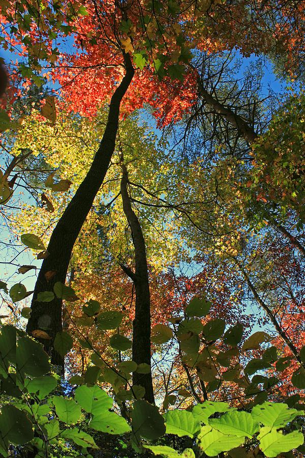 Autumn Photograph - Autumn Light by Dave Alexander