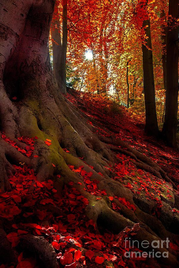 Autumn Photograph - Autumn Light by Hannes Cmarits