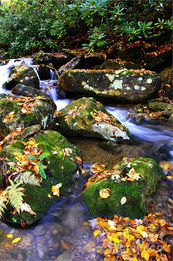 Autumn Monongahela National Forest Photograph