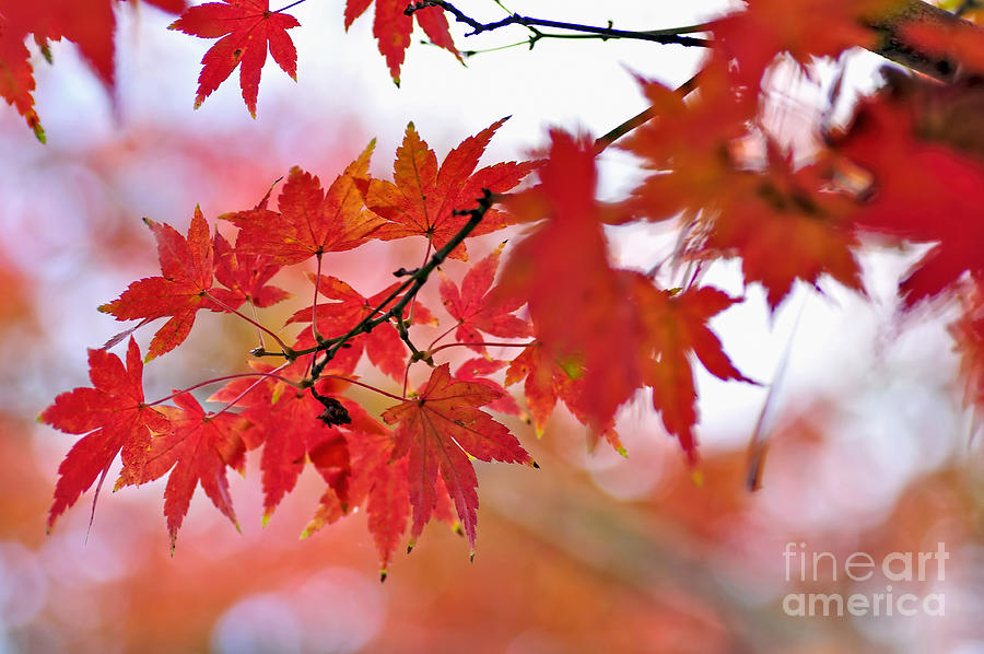Photography Photograph - Autumn Pastel by Kaye Menner