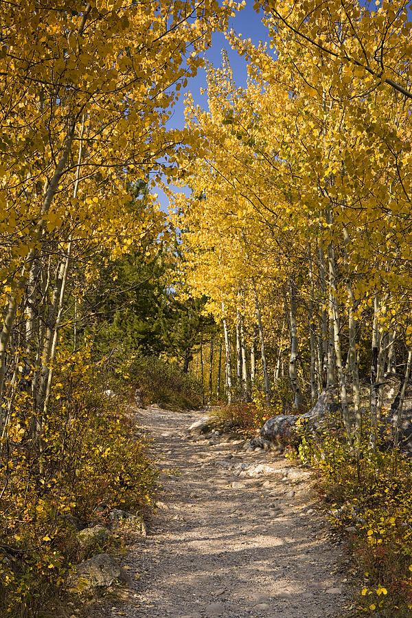 Autumn. Fall Photograph - Autumn Path by Andrew Soundarajan