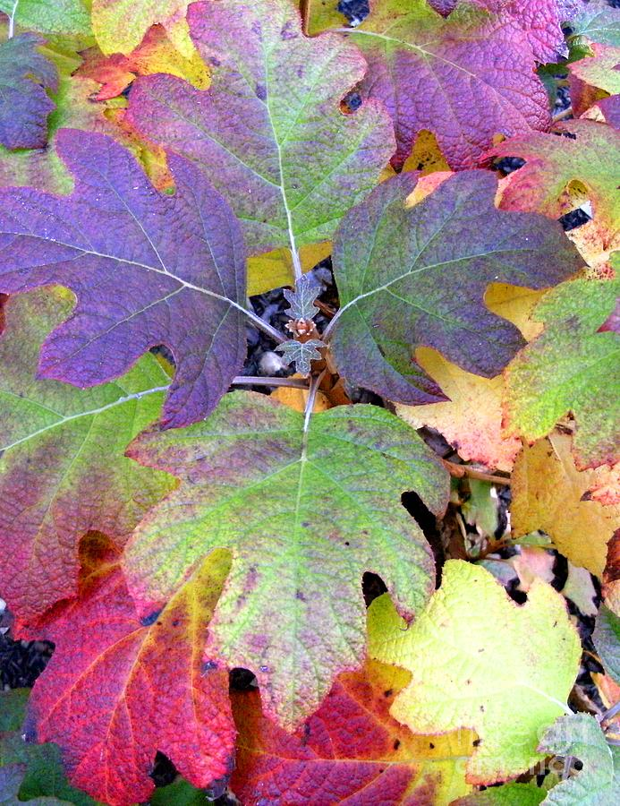 Autumn Photograph - Autumn Rainbows by Mindy Newman