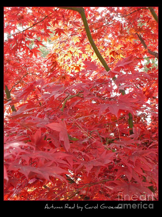 Autumn Red Poster Photograph