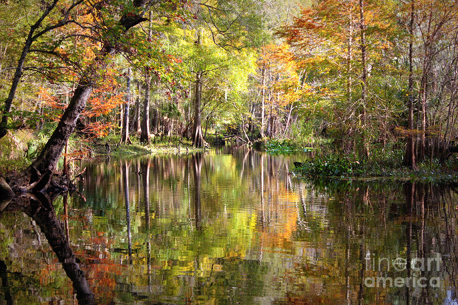 Autumn In Florida Photograph - Autumn Reflection On Florida River by Carol Groenen