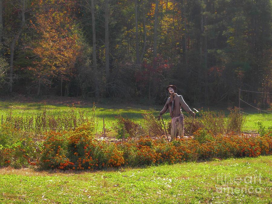 Autumn Scarecrow Photograph