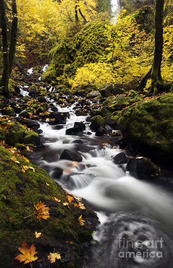 Starvation Creek Photograph - Autumn Swirl by Mike  Dawson