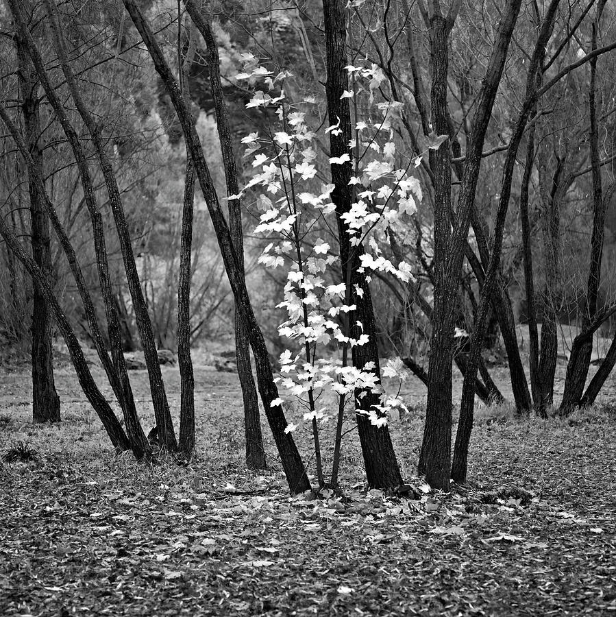 Autumn Photograph - Autumn Tones by Odille Esmonde-Morgan