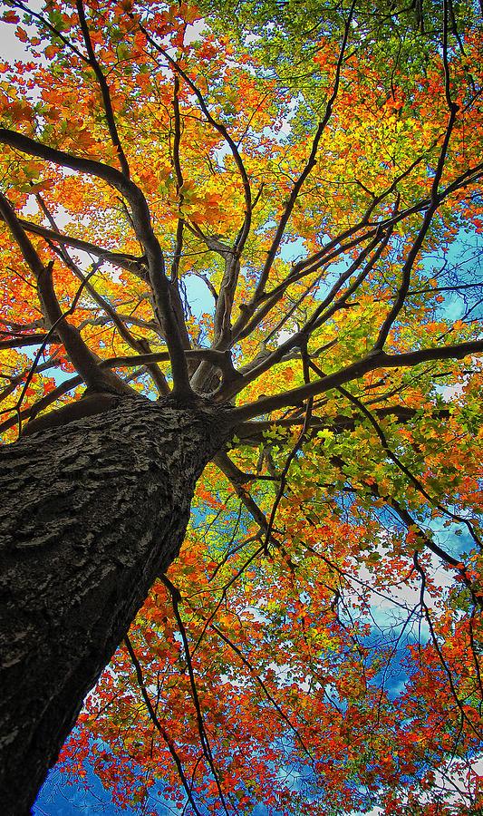 Autumn Photograph - Autumn Tree by Peg Runyan