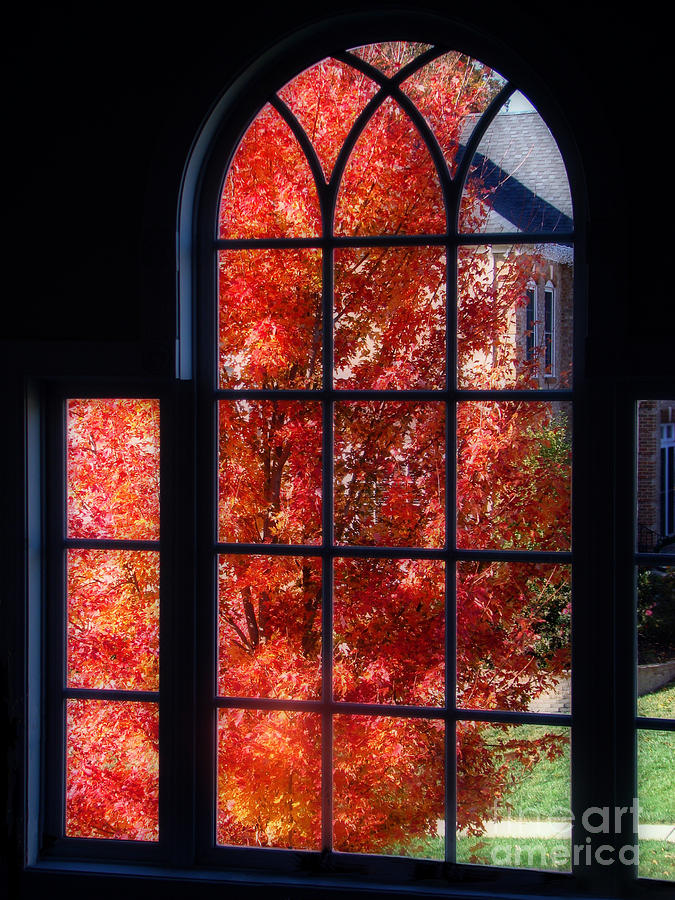 Autumn Photograph - Autumn View Thru A Picture Window by Sue Melvin