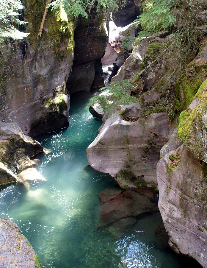 Avalanche Creek Glacier National Park Photograph
