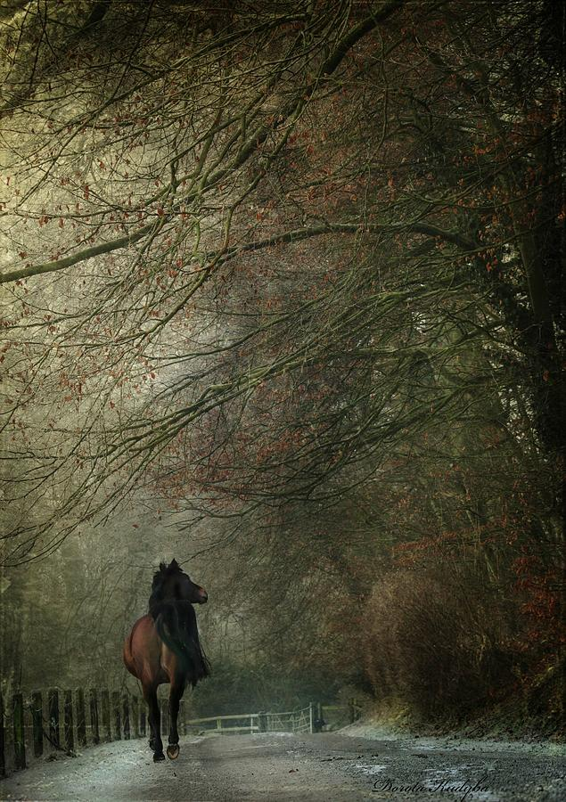 Horse Photograph - Avenue Walk by Dorota Kudyba