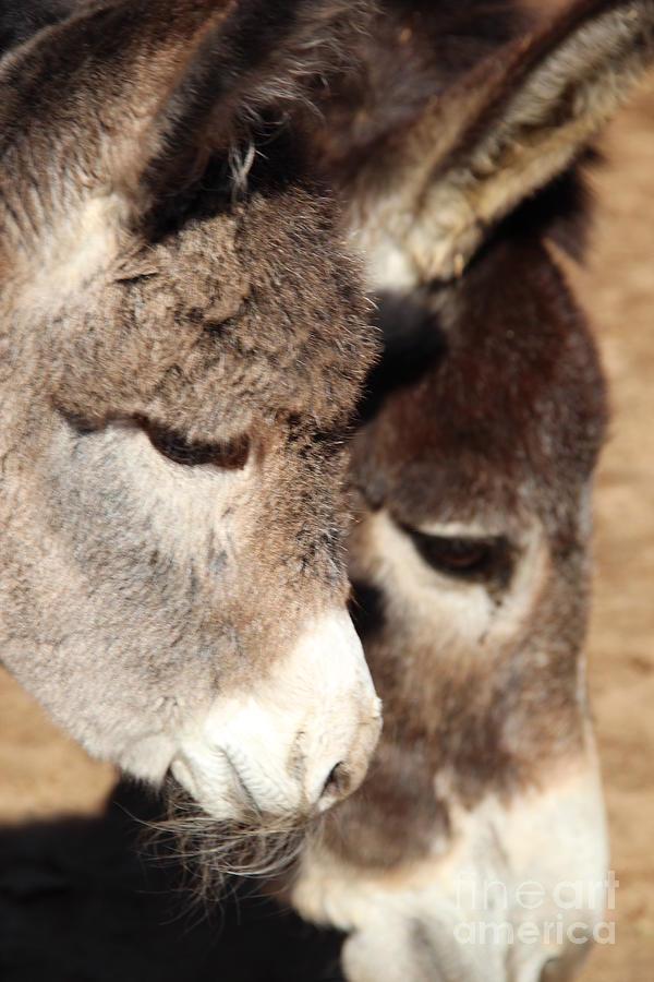 Baby Donkey Photograph - Baby Donkey by Pauline Ross