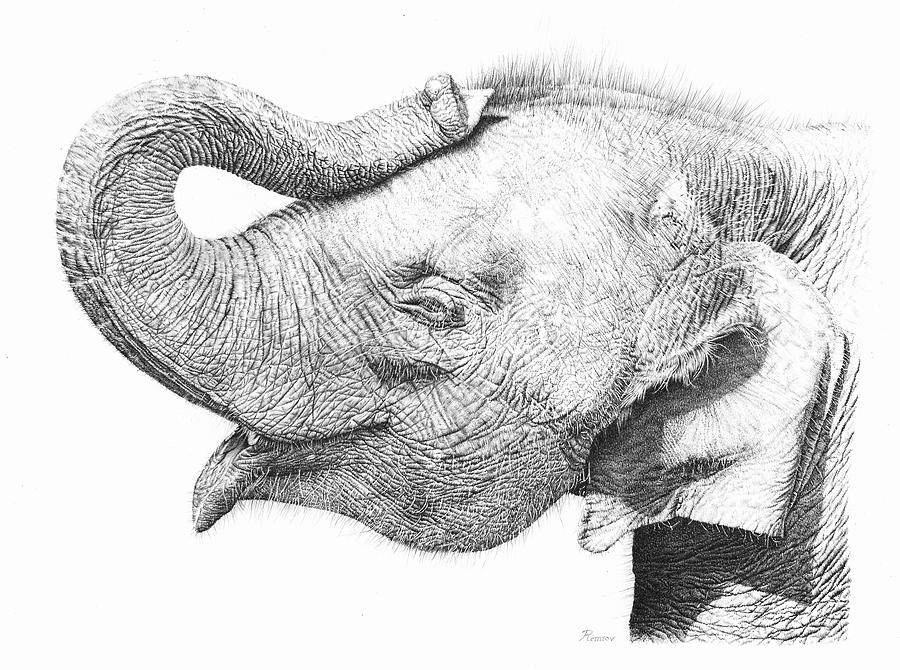 how to draw a realistic baby elephant