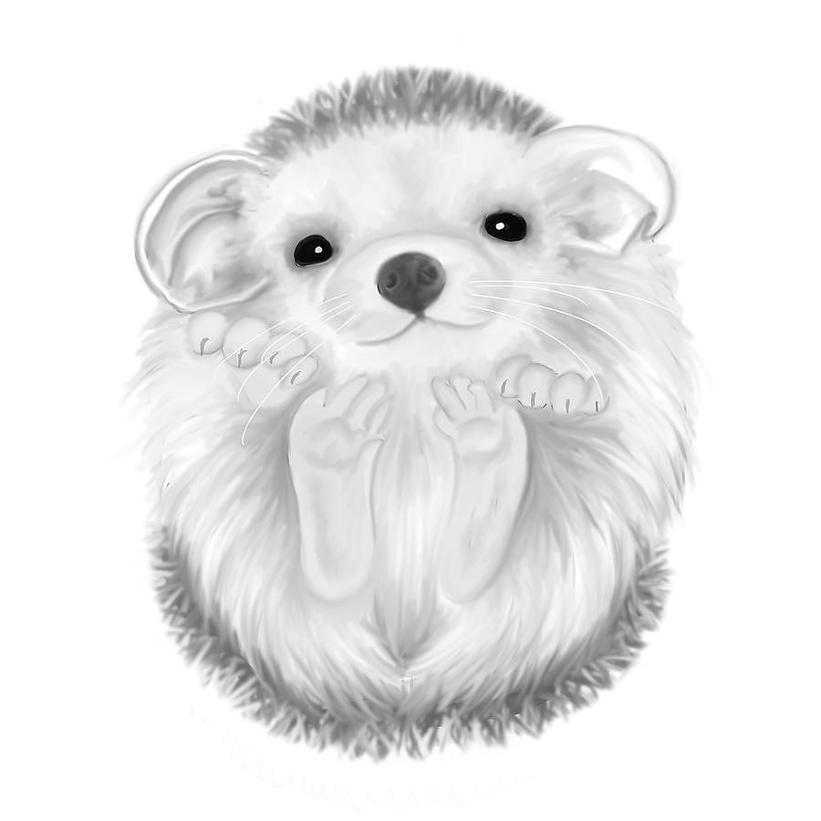 Image Gallery hedgehog drawing