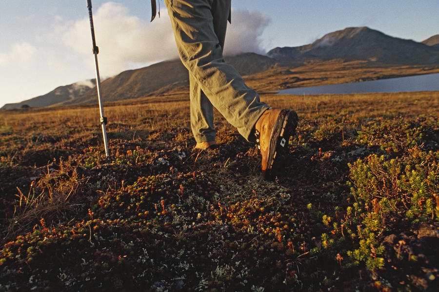 Selwyn Mountains Photograph - Backpacker Hikes Across Tundra In Logan by Gordon Wiltsie