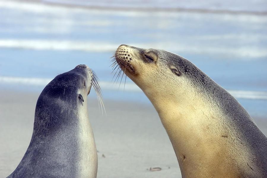 Sea Lion Photograph - Backtalk by Mike  Dawson