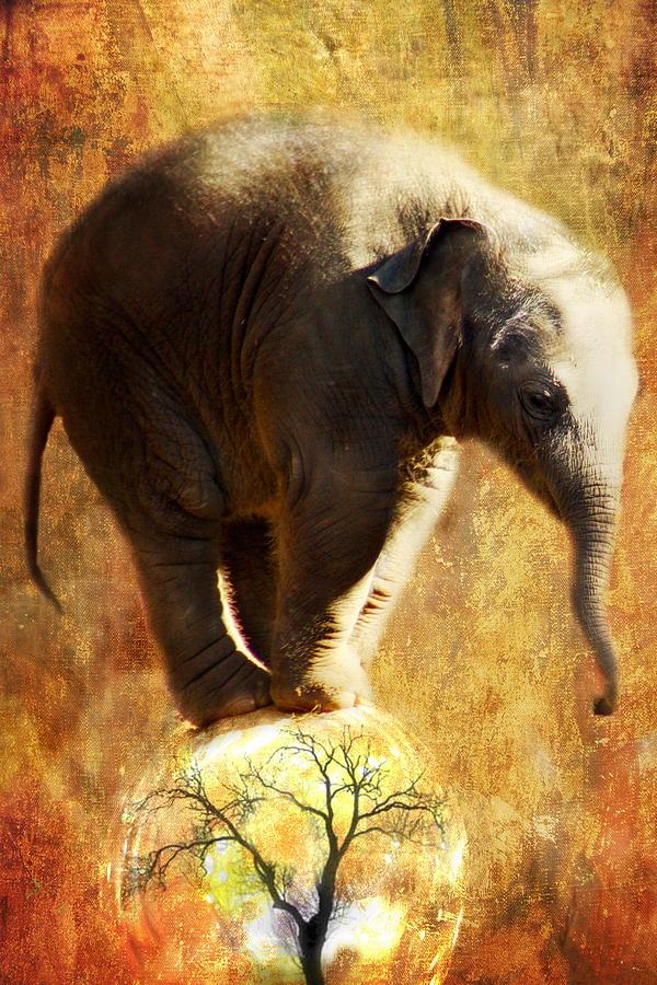 Elephant Digital Art - Balance by Trudi Simmonds