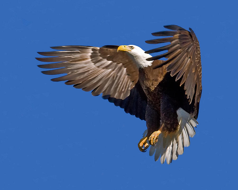 the eagle landing by - photo #36