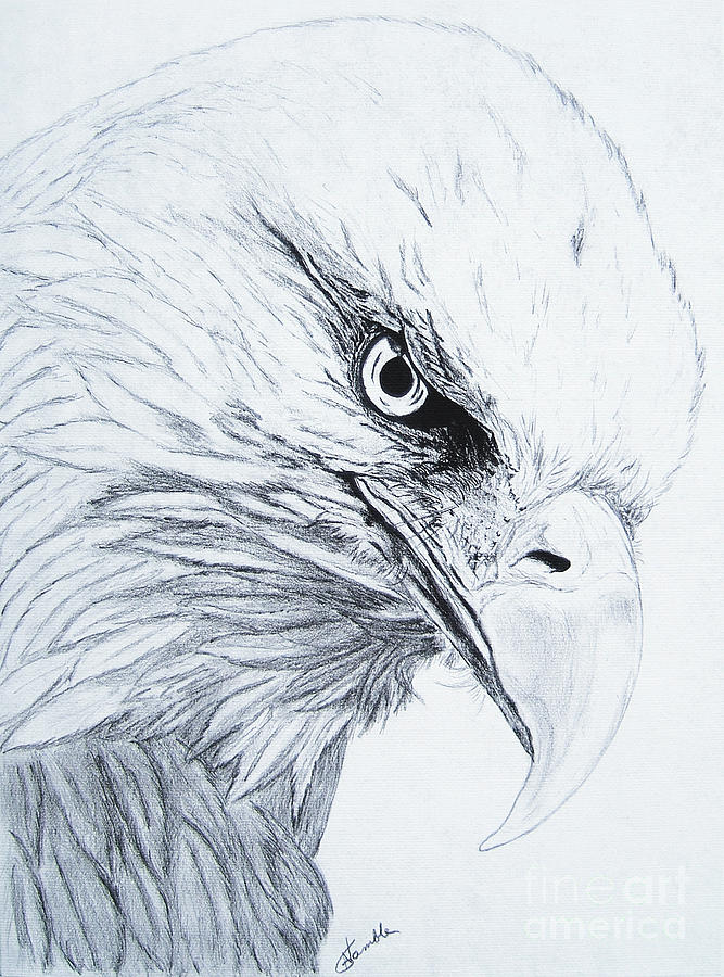 Pencil Drawing Drawing - Bald Eagle by Nancy Rucker