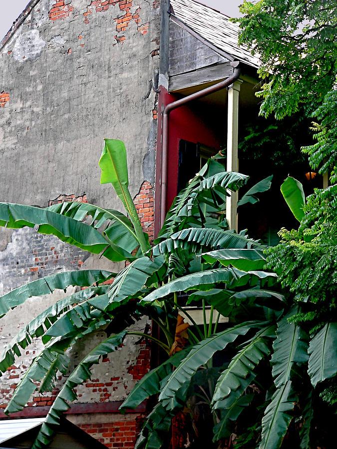 Bananas And Bricks Photograph