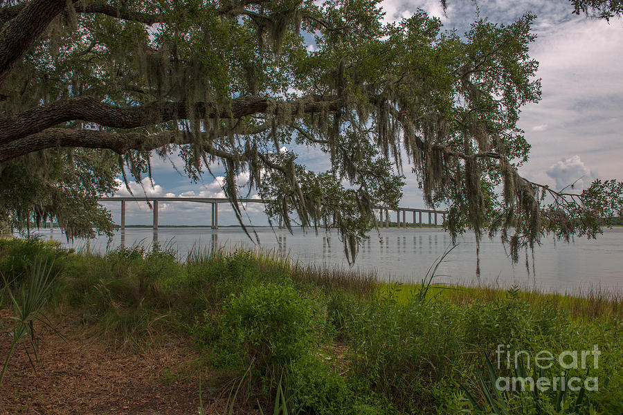 Banks Of The Wando River Photograph