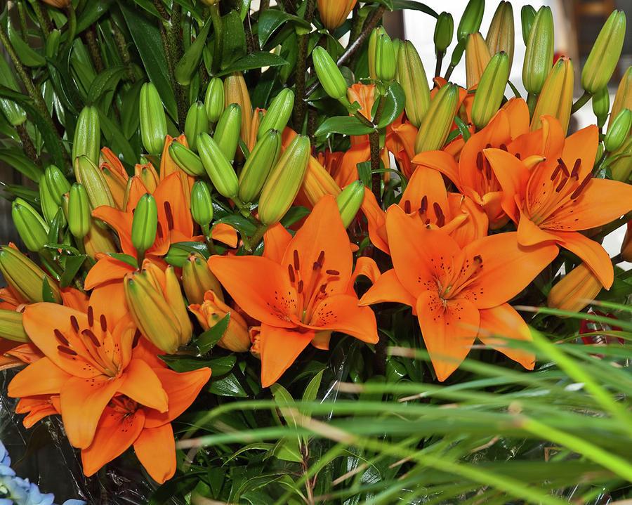 Orange Photograph - Barcelona Lillies by Michael Flood