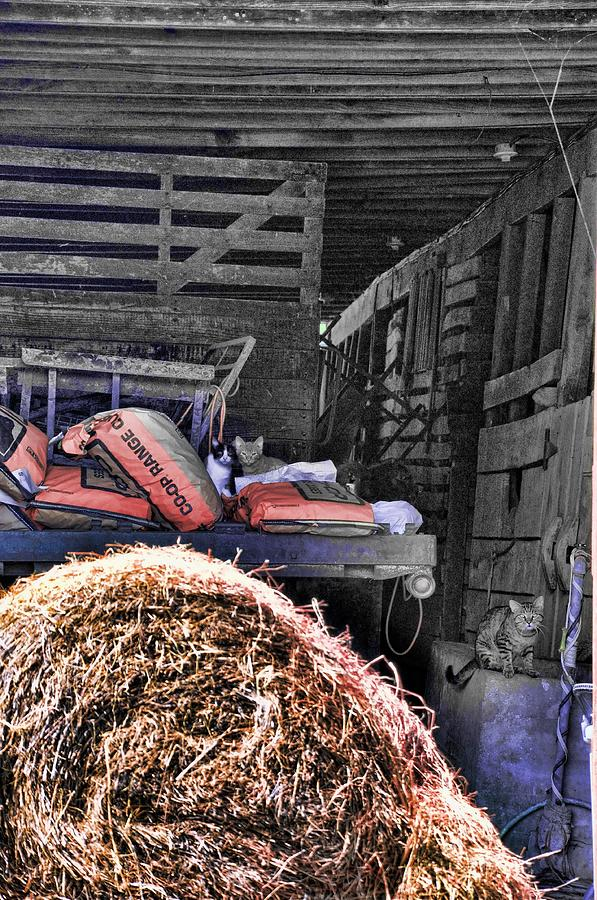 Barn Cats Photograph