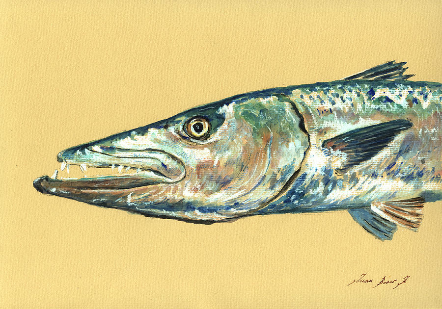 Barracuda fish painting by juan bosco for Barracuda fish for sale