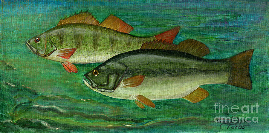 Folkartanna Painting - Bass And Perch by Anna Folkartanna Maciejewska-Dyba