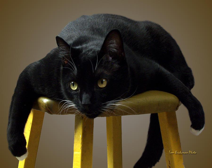 Bat Photograph - Batcat by Tom Buchanan