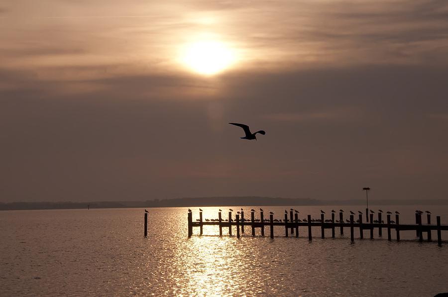 Chesapeake Photograph - Bay Sunrise by Bill Cannon