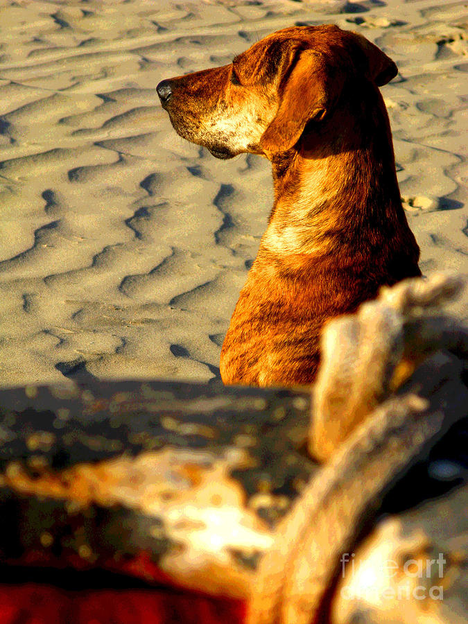Beach Pooch By Michael Fitzpatrick Photograph