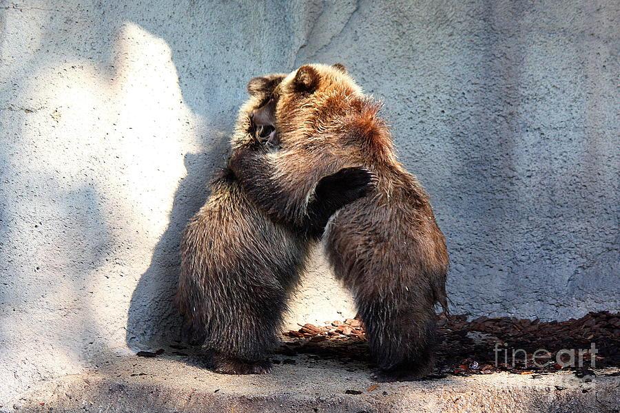 Cub Photograph - Bear Hugs. No.2 by RL Clough