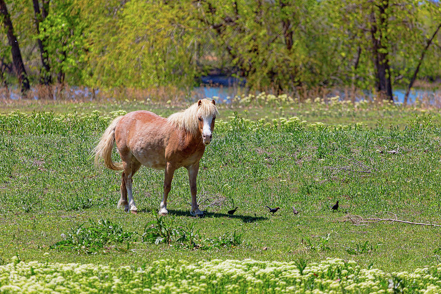 Beautiful Blond Horse And Four Little Birdies Photograph