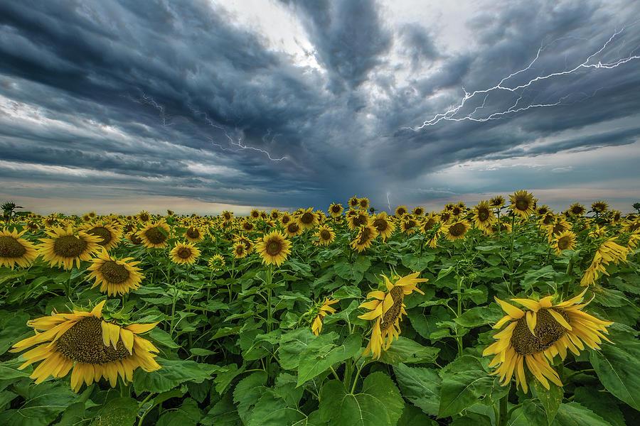 Beautiful Disaster Photograph