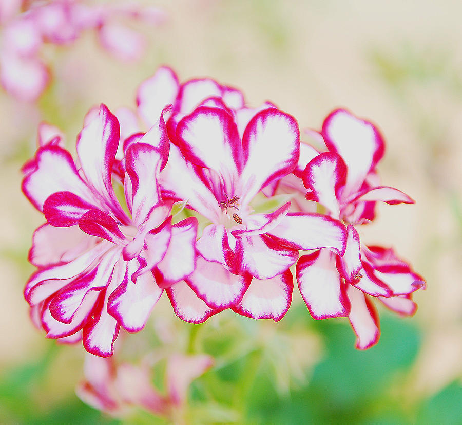 Beautiful Flowers Photograph - Beautiful Flowers by Alicia Morales