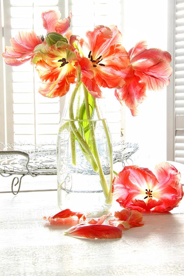 Beautiful Tulips In Old Milk Bottle Photograph