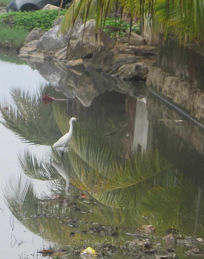 Honduras Photograph - Beauty In The Swamp by Michael Litvack