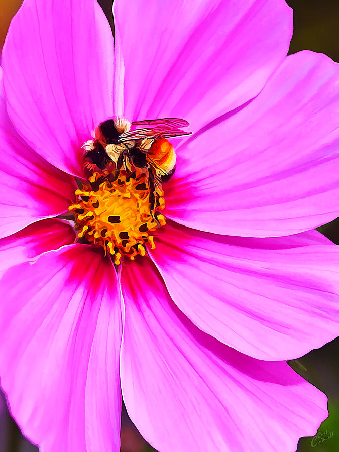 Nature Photograph - Bee On Pink by Bill Caldwell -        ABeautifulSky Photography
