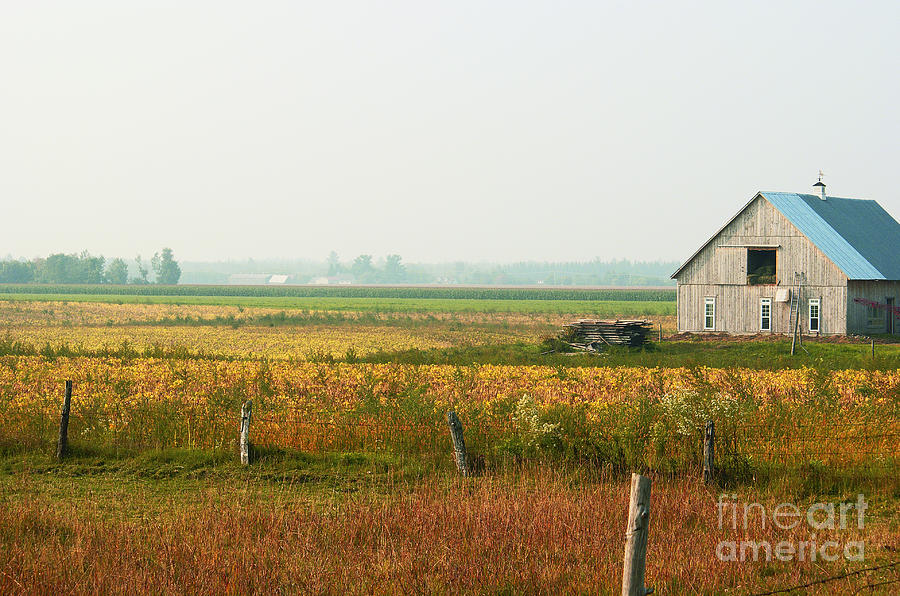 Countryside Photograph - Before The Sweat by Aimelle