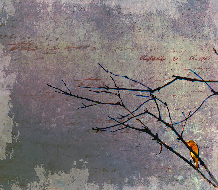 Yellow Warbler Photograph - Behind Every Dark Cloud.... by Nancy  Coelho