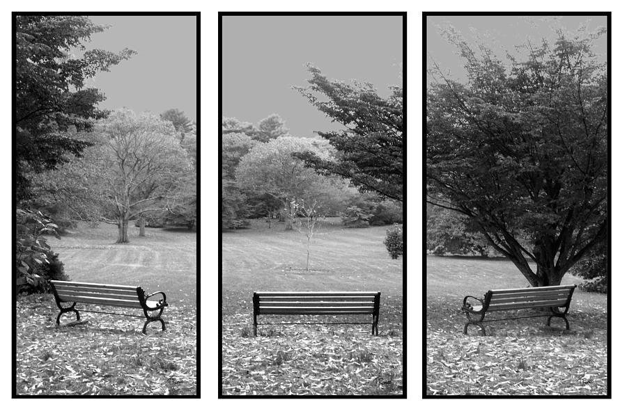 Bench View Triptic Digital Art