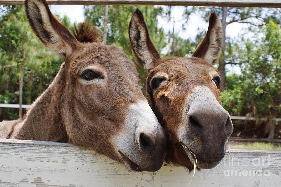 Donkey Photograph - Best Buddies 2 by Wibada Photo